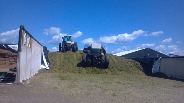 white 6215 on silage pile