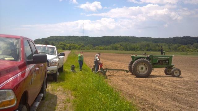 alfalfa test plot