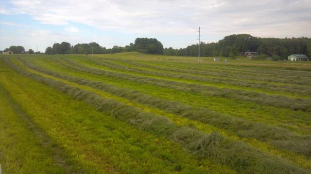 raking grass hay