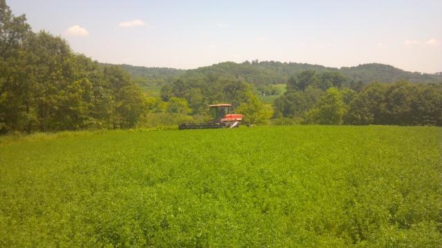 McDon Swather cutting hay