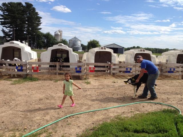 cute farm girl leading calf