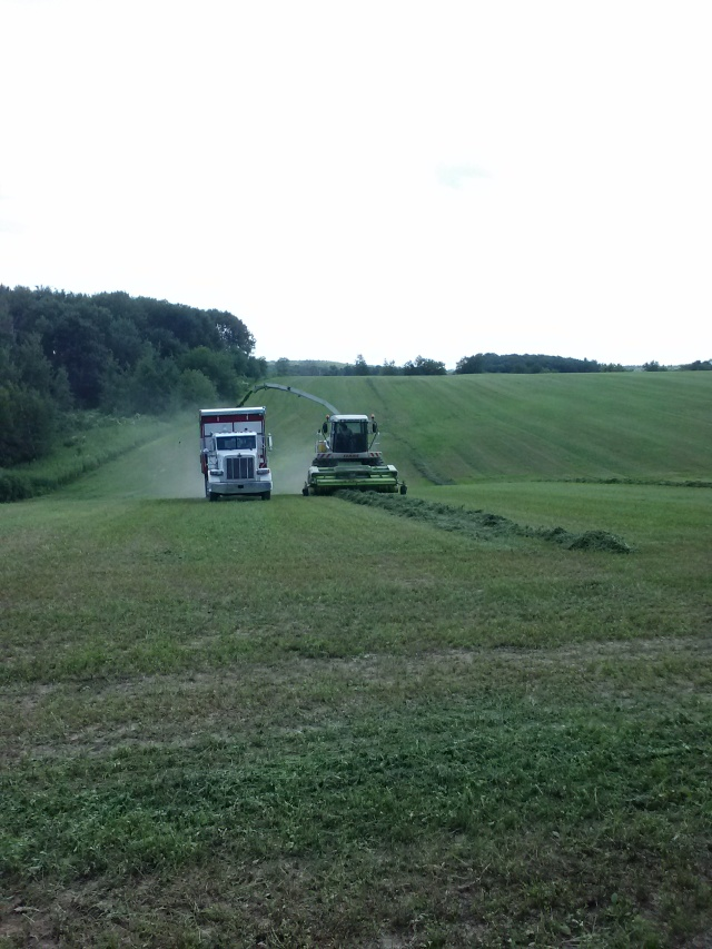 claas 900 chopping into a peterbilt with meyers forage box