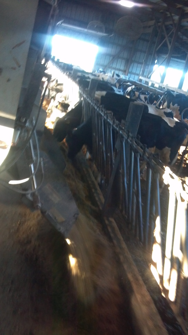 factory farm feeding organic feeding
