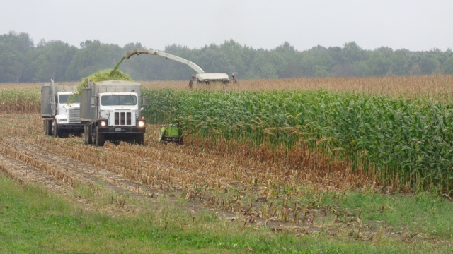 Claas 900 chopping corn into trucks