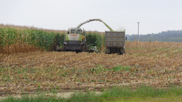 claas 900 chopping into forage truck