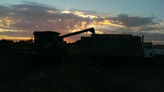 john deere combine unloading at sunset