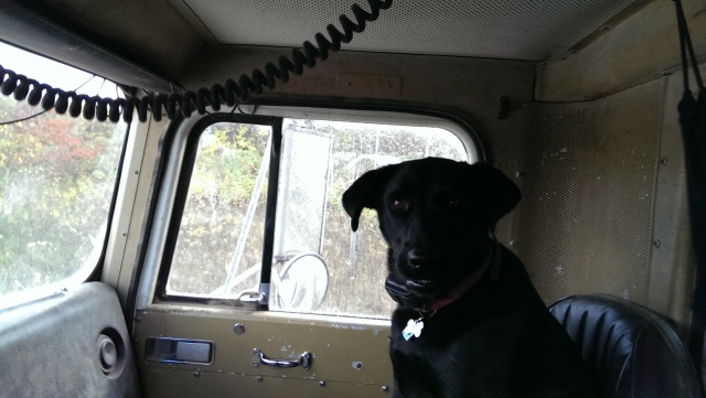 loveable mutt in a farm truck black lab