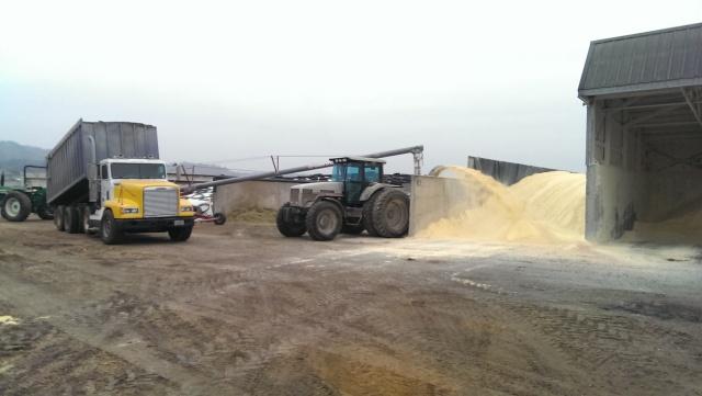 white 6215 grinding corn