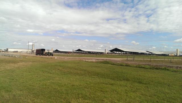 large Floridian dairy