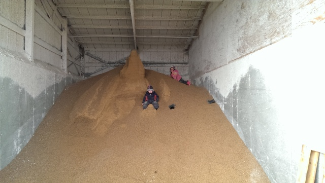 farm kids playing in feed