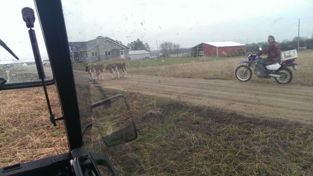 modern day cattle drive
