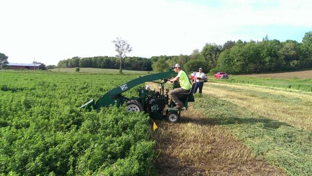dairyland seed alfalfa plot
