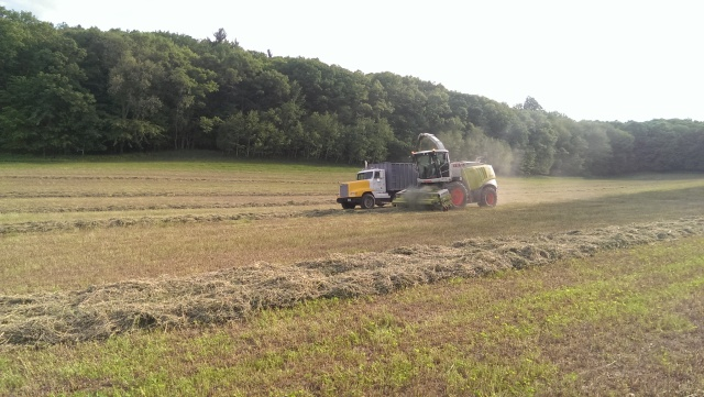 claas 960 chopping hay into truck