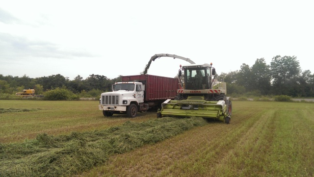 claas 900 chopping alfalfa into truck