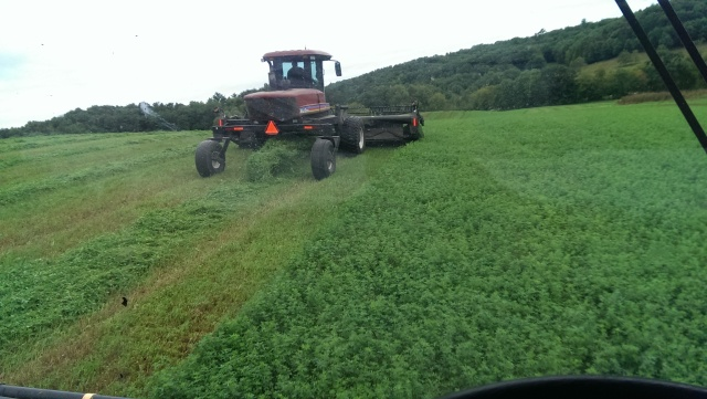 cutting hay macdon swather