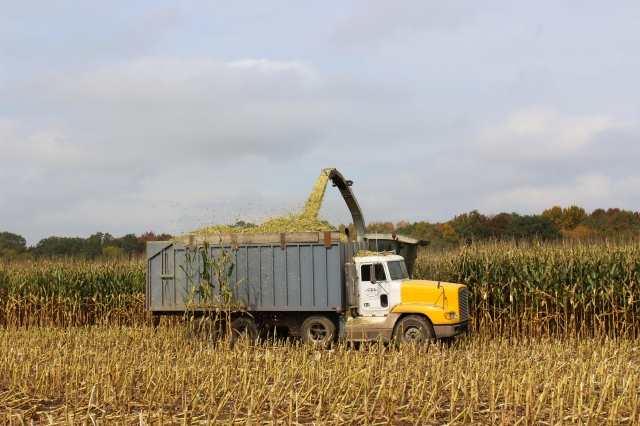 claas 900 chopping corn freightliner