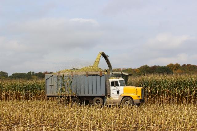 claas 900 chopping corn freightliner