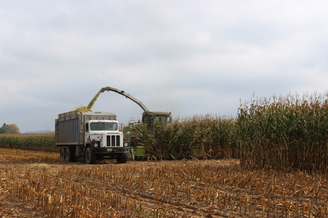claas 492 chopping corn into truck