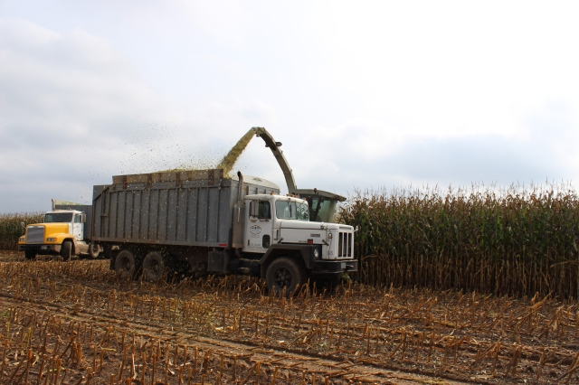 claas 492 series chopping into truck