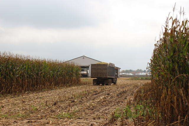 harvest 14 truck load dairy barn