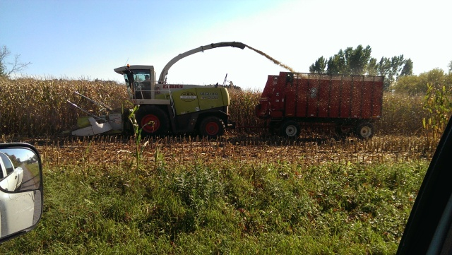 claas 900 chopping into meyers chopper box