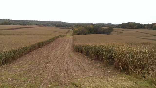 opening up corn silage fields
