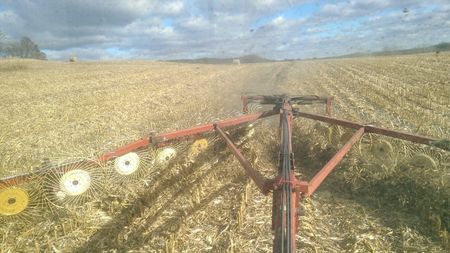 raking corn stalks